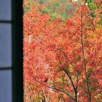 お部屋から観える紅葉。