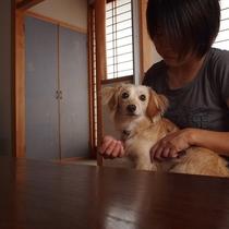 ■ペットと泊れる温泉宿③※2016年10月~開始!!