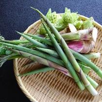 *山菜(イメージ)