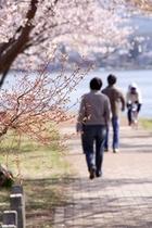学生(桜)