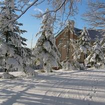 ◆雪の足跡 並木道