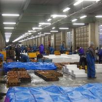 夜明け前の母港では、水揚げしたカニを漁師の家族や関係者が総出で仕分けに係り、競りに備えます。