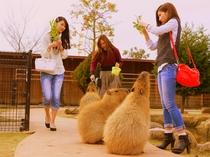 赤穂海浜公園の動物ふれあい村