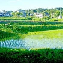 *【戸狩り風景】美しい田園の景色が懐かしい。