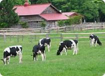 小岩井農場約60分。広大な敷地内で、馬や羊等の動物と直接触れ合うことが出来る。