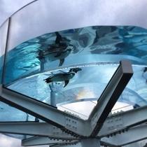越前松山水族館(当館から車で15分)