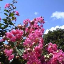 【園内の花】7月~9月はサルスベリの花が紅色に彩ます♪
