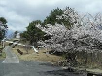 ふれあいの森(天文台と桜)