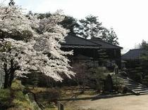 吹屋小学校と桜1