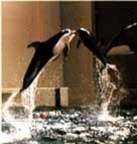 アクアワ-ルド水族館