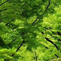 新緑 夏の始まり・・・