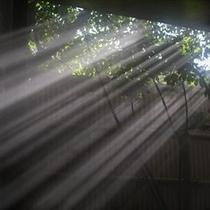 大浴場「山頭火の湯」に差し込む美しい光