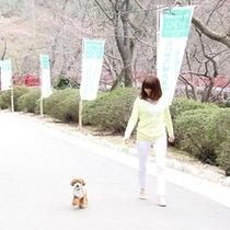 ワンちゃんと一緒に散歩