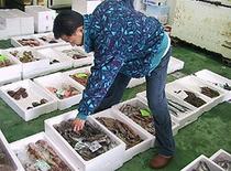 主人自ら日本海市場まで買い付けに。