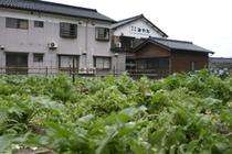 施設に隣接する自家農園