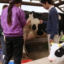 乳搾り体験 滝沢牧場