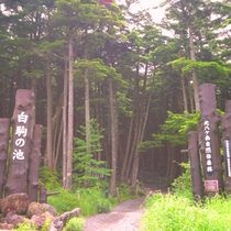 北八ヶ岳自然休養林