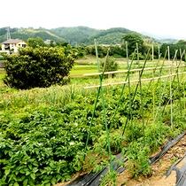 【施設】収穫体験もできる菜園