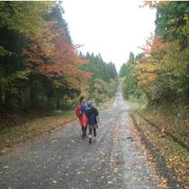 秋の高原散策