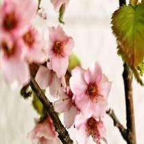 平湯の「山桜」