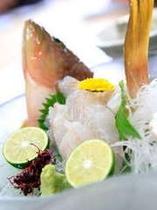 夏の高級魚キジハタ