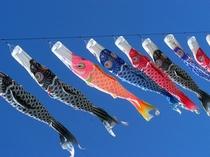 鯉のぼり祭