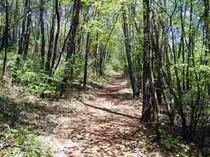 森の散歩道