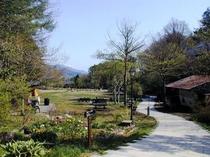 萌木の村の小道
