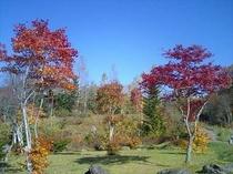 さかもと公園(秋)