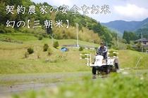 三朝米(2016)