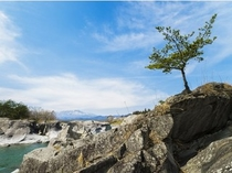 奇岩に生える『ど根性松!?』