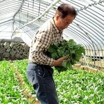 ◆当館指定市川農園の新鮮野菜