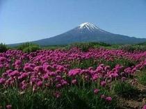 富士山 春