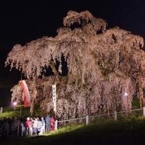 三春滝桜の夜の風景はまた別な表情を見せます!