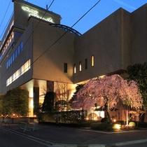 ホテルハマツ敷地内のしだれ桜