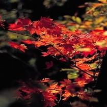 ホテル周辺の紅葉