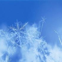 ニセコの雪の結晶