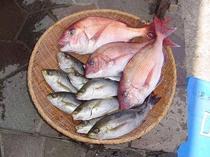 食材(魚)
