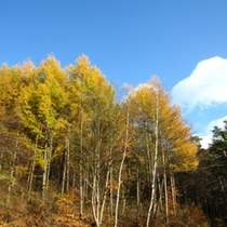 浅間山荘の秋4