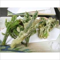 山菜の天ぷらです