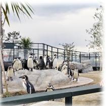 【近辺観光】下関市立水族館「海響館」内、ペンギン村♪