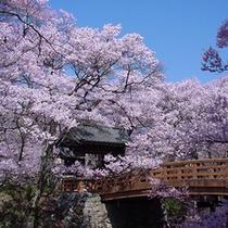 高遠城址公園 桜雲橋