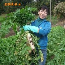 *野菜収穫