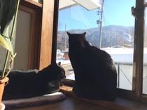 猫がいます♪