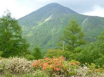 蓼科山とツツジ