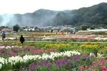 周辺情報-千倉の花畑-