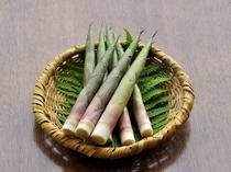 北信州の初夏の風物詩「根曲竹」