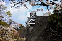 【観光】熊本城二様の石垣