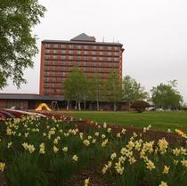 ホテル前の公園はお花が満開♪