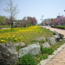 ★ホテル周辺・桜散歩
